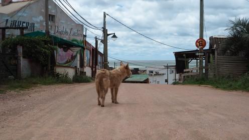 ein Hund in Punta del Diablo