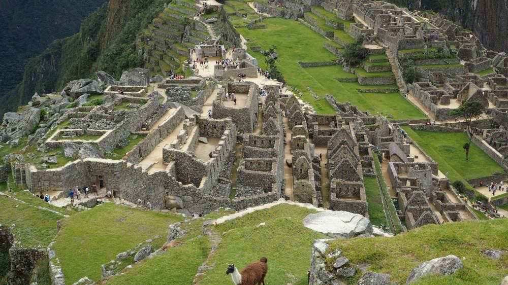 Ein Lama in Machu Picchu