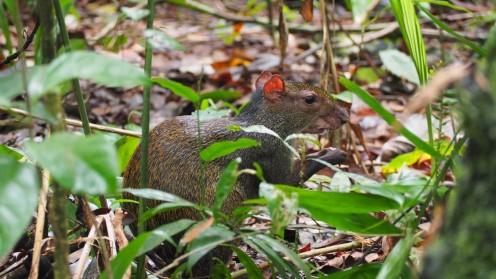 Ein Tier im Wald