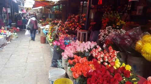 Wolle Rose kaufen?