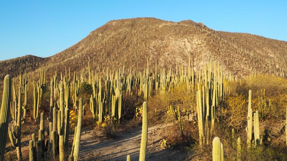 Sommer Sonne Kaktus