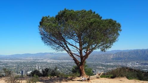 Wisdom Tree mit Wunschbox im Vordergrund